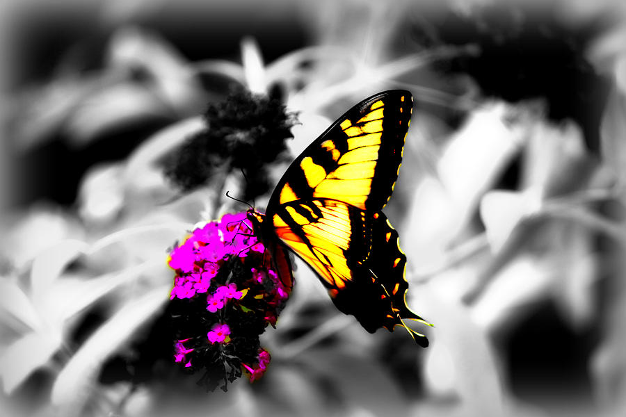 Butterfly Photograph - Butterfly And Lilac by Tina Meador