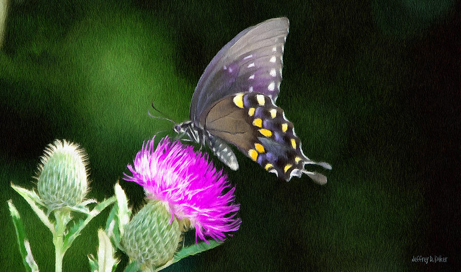 Butterfly Painting - Butterfly And Thistle by Jeff Kolker