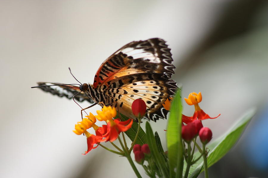 Nature Photograph - Butterfly by Andre Bijkerk