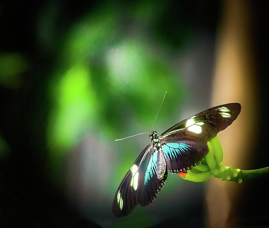 Butterfly at Cleveland Botanical Gardens by Richard Goldman