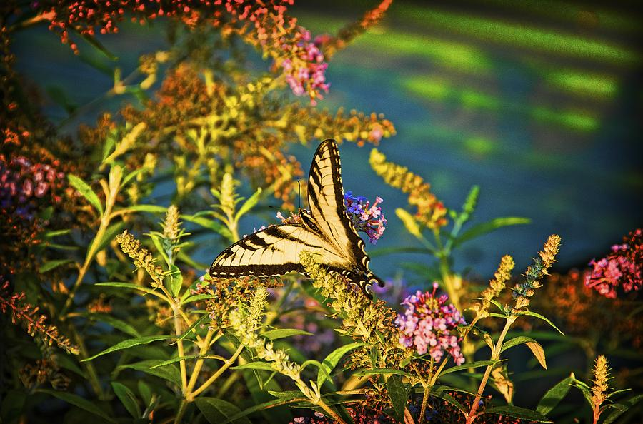 Butterfly Photograph - Butterfly Bandit by Nick Roberts