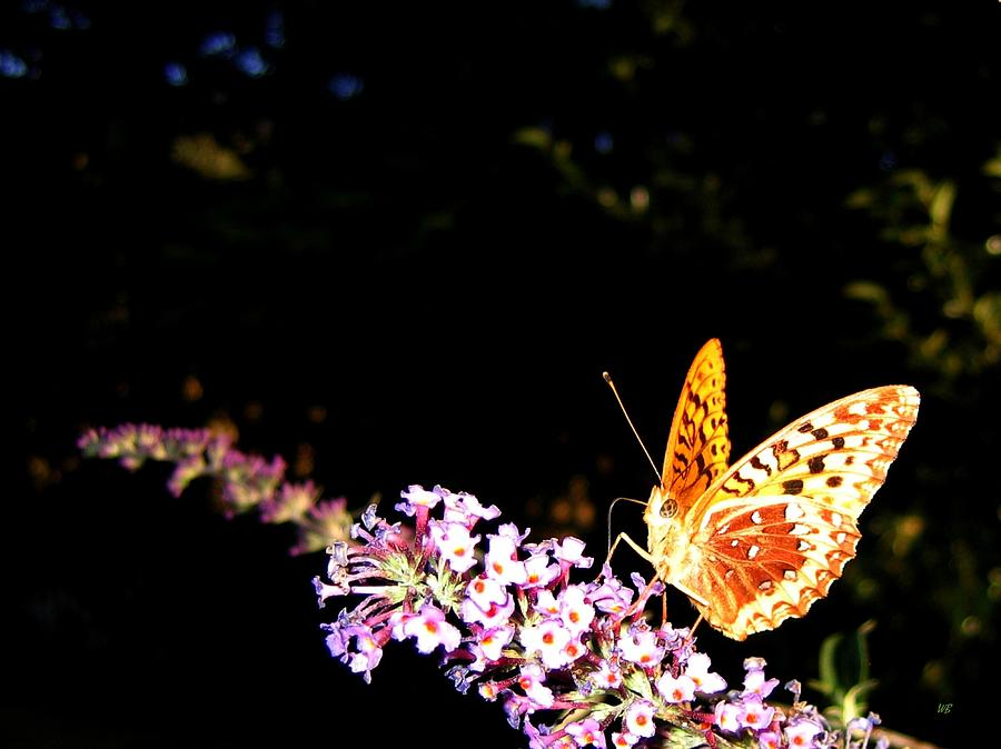 Butterfly Photograph - Butterfly Banquet 1 by Will Borden