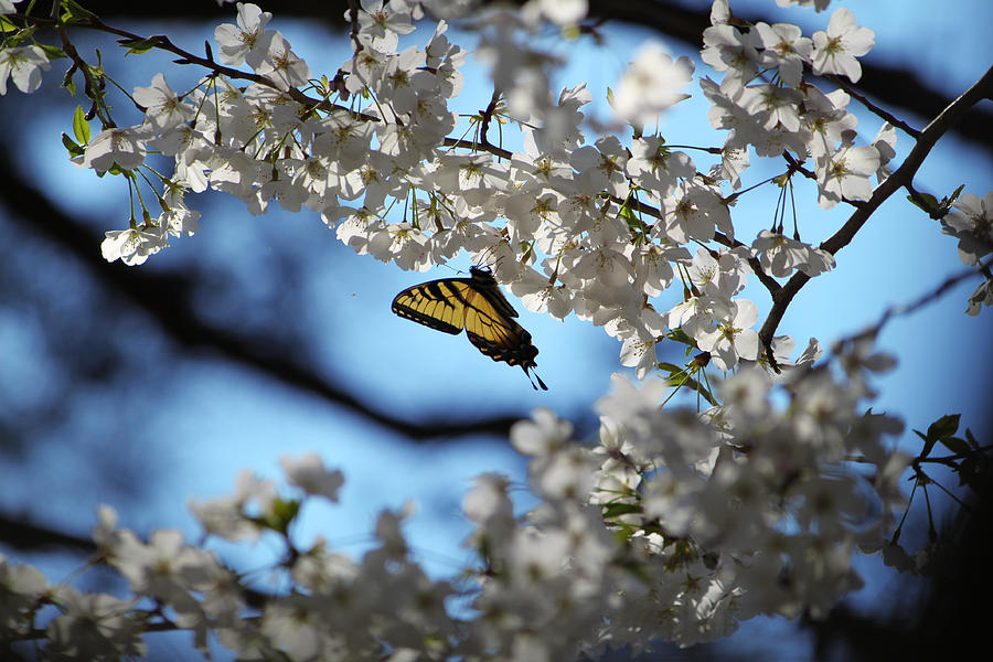 Photograph Photograph - Butterfly Blossom by Nathan Grisham