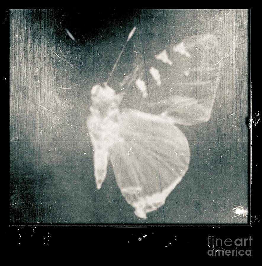 Butterfly Calendar 2010 Painting by Joanna Kireli