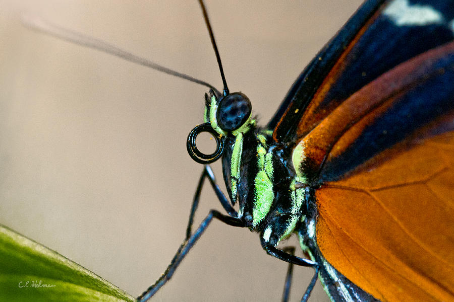 Butterfly Closeup Photograph by Christopher Holmes