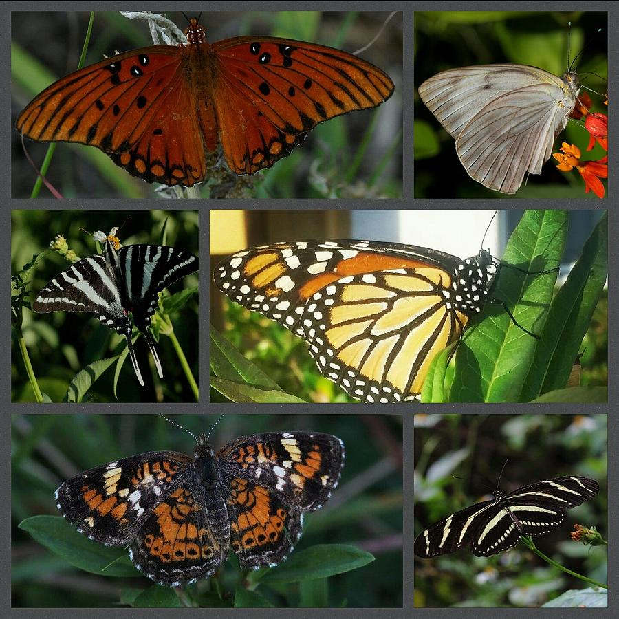 Butterfly Photograph - Butterfly Collage 2  by April Wietrecki Green