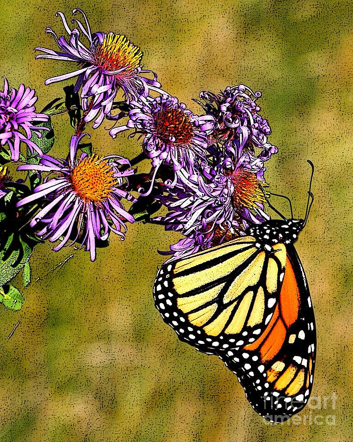 Berry Photograph - Butterfly Delight by Diane E Berry
