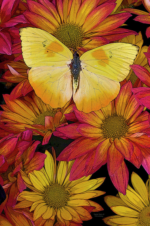 Butterfly Painting - Butterfly Detail by JQ Licensing