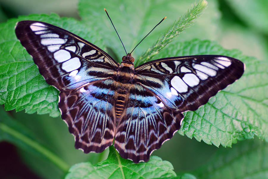 Butterfly Photograph - Butterfly by Don  Wright