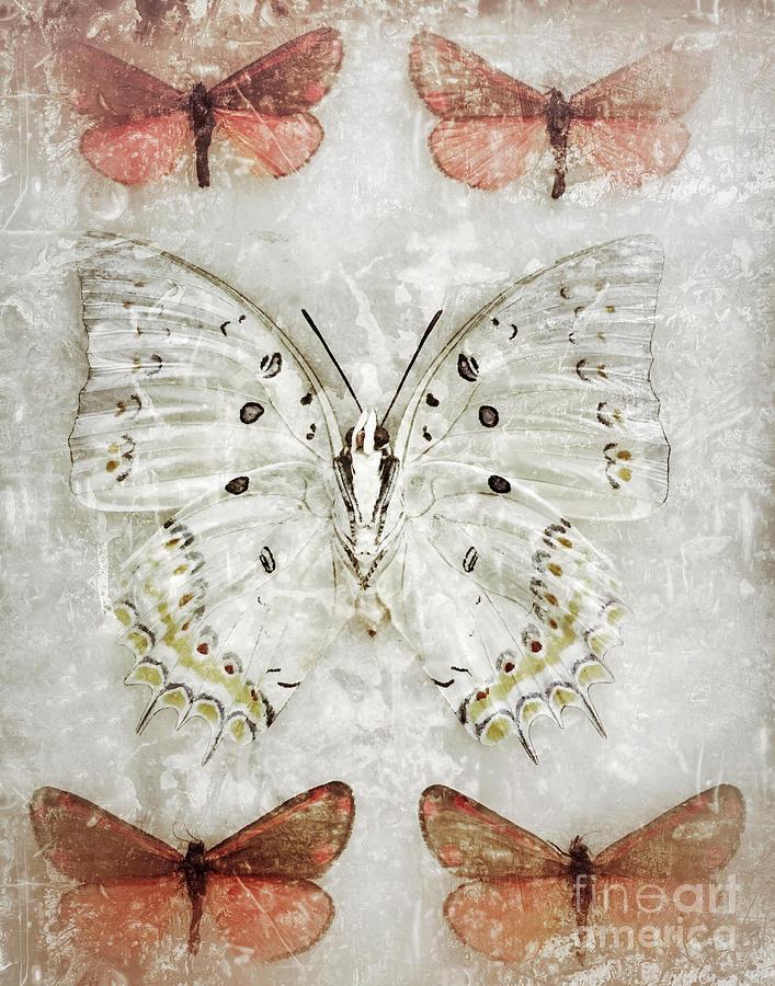 Butterfly Dream by Chris Scroggins