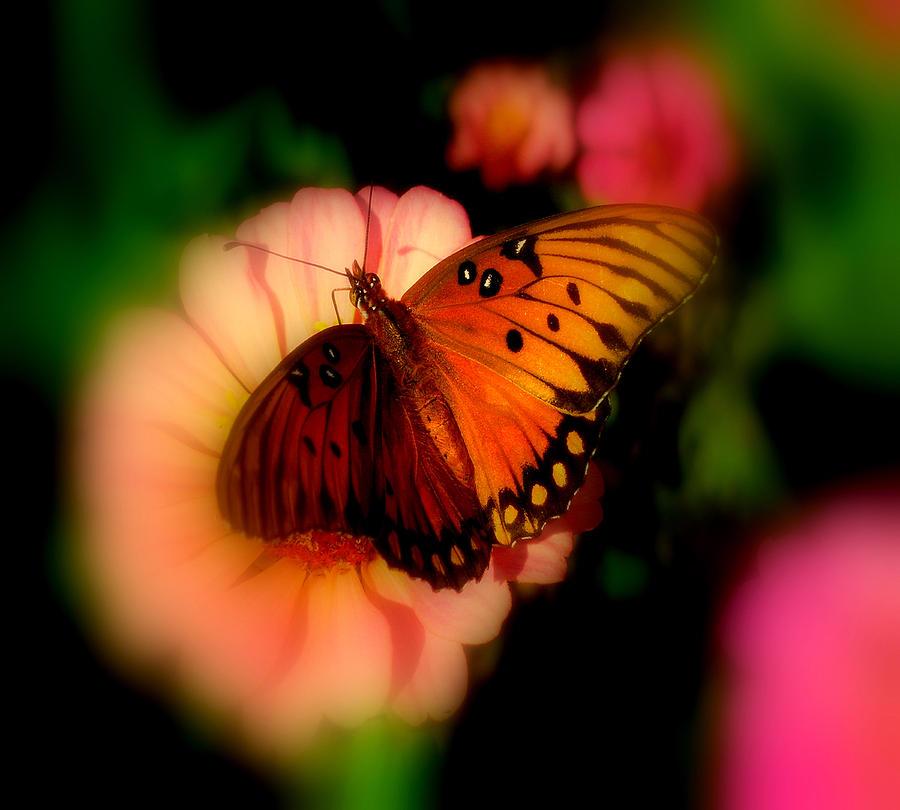 Butterfly Photograph - Butterfly Dreams by Dottie Dees
