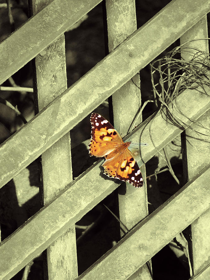 Nature Photograph - Butterfly by Eby Man