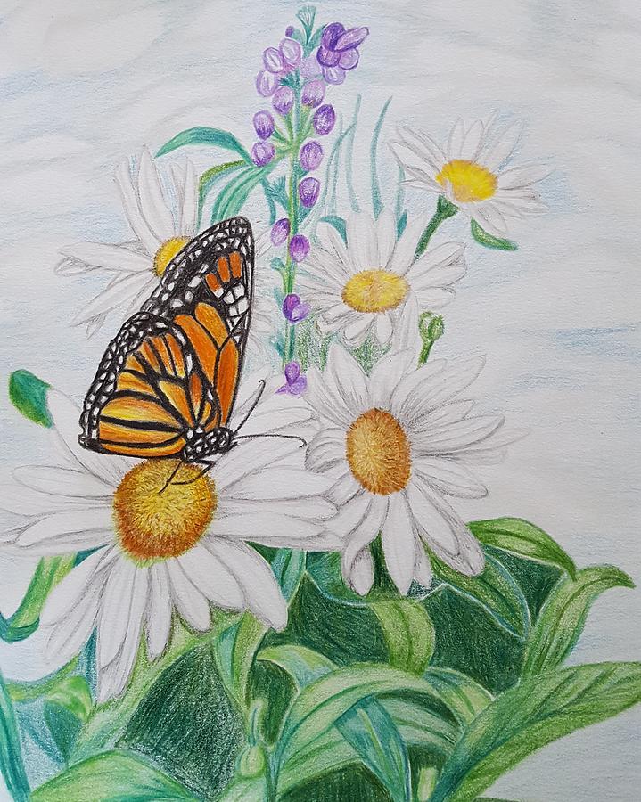 Butterfly Garden Drawing by Meghan Forminsky