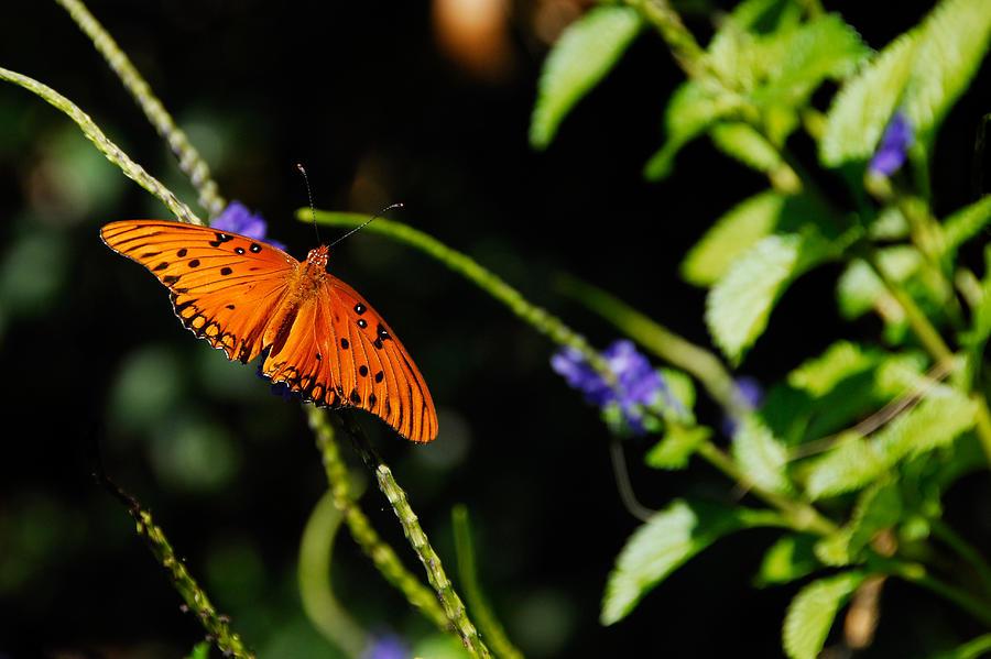 Butterfly by Harry Spitz