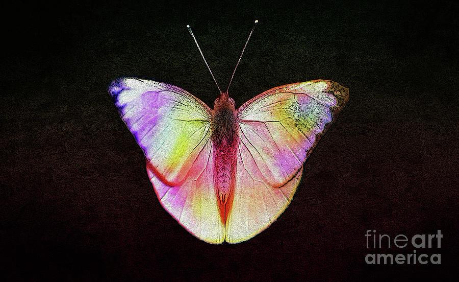Butterfly Digital Art - Butterfly In Retro  by Manjot Singh Sachdeva