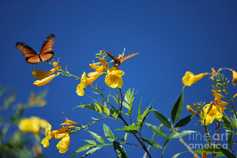 Butterfly Photograph - Butterfly In The Sonoran Desert Musuem by Donna Greene