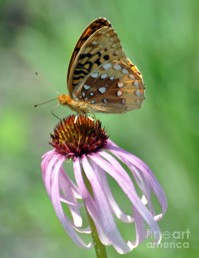 Butterfly Photograph - Butterfly In The Wind by Marty Koch