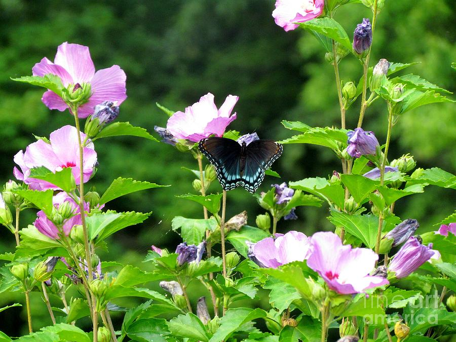 Butterfly Photograph by James Seitzinger