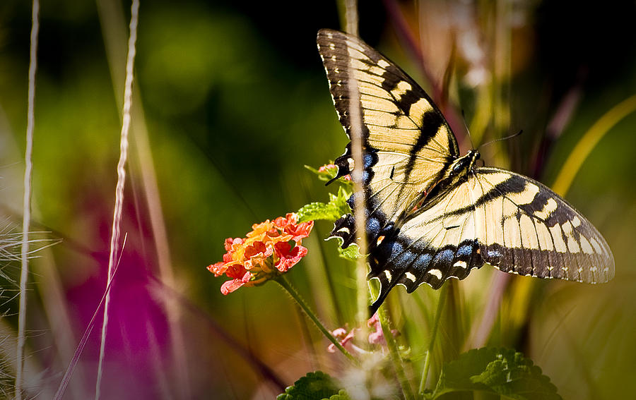 Nature Photograph - Butterfly Jungle by Ches Black