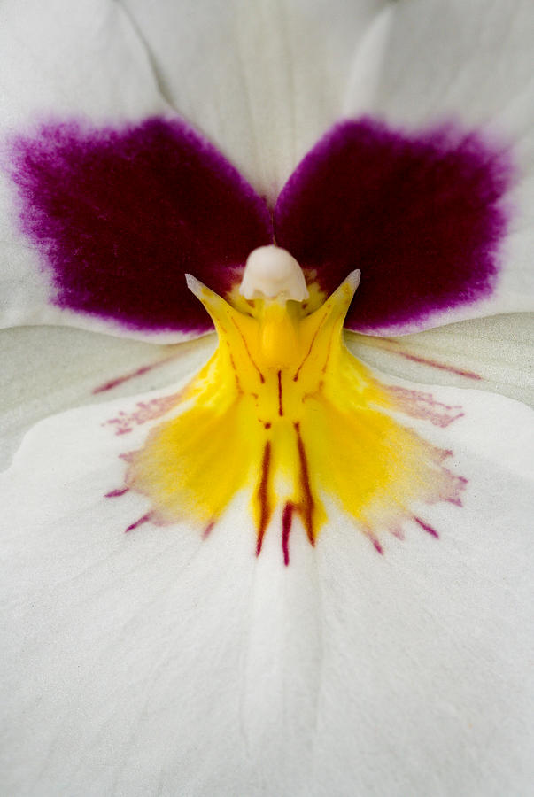 Orchid Photograph - Butterfly by Karen Ulvestad
