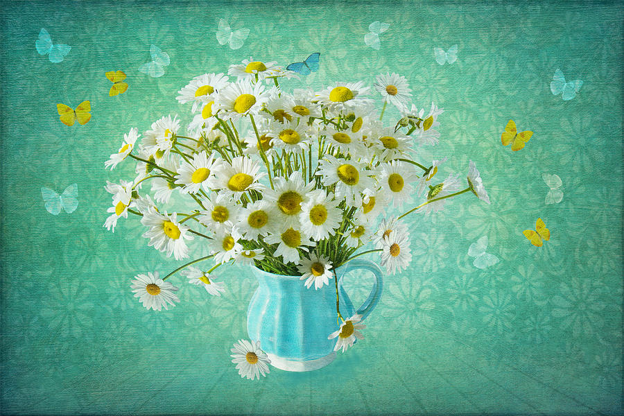 Daisy Photograph - Butterfly Kisses And Flower Petal Wishes  by Marina Kojukhova
