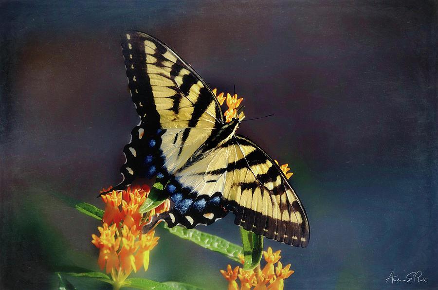 Butterfly Landing by Andrea Platt