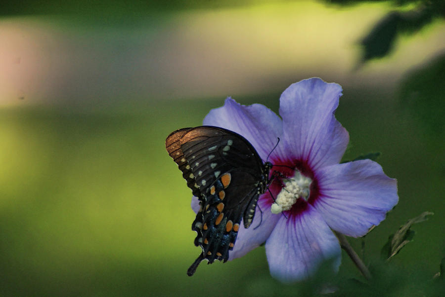 Butterfly Lunch by Rick Friedle