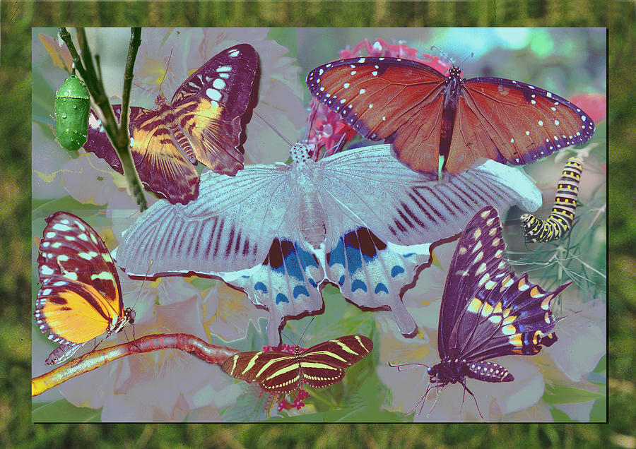 Black Swallowtail Butterfly Digital Art - Butterfly Montage by Richard Nickson