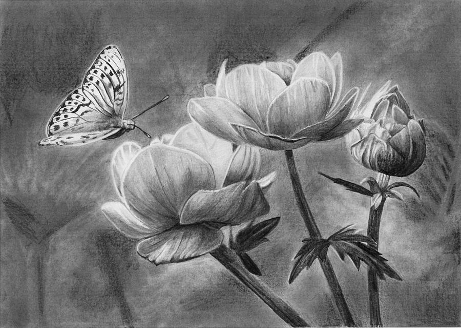 Pencil Drawing - Butterfly on a Flower by Nolan Clark