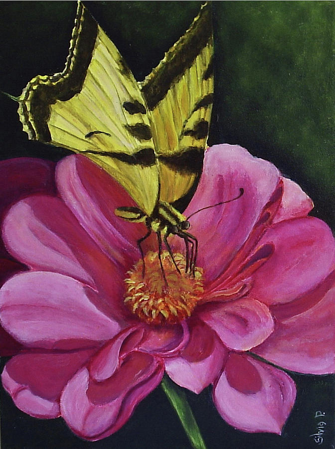 Flower Painting - Butterfly On A Pink Daisy by Silvia Philippsohn
