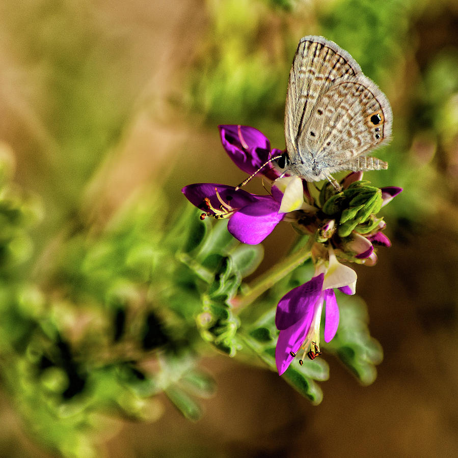 Botanicgarden Photograph - Butterfly on a purple flower by Emily Bristor
