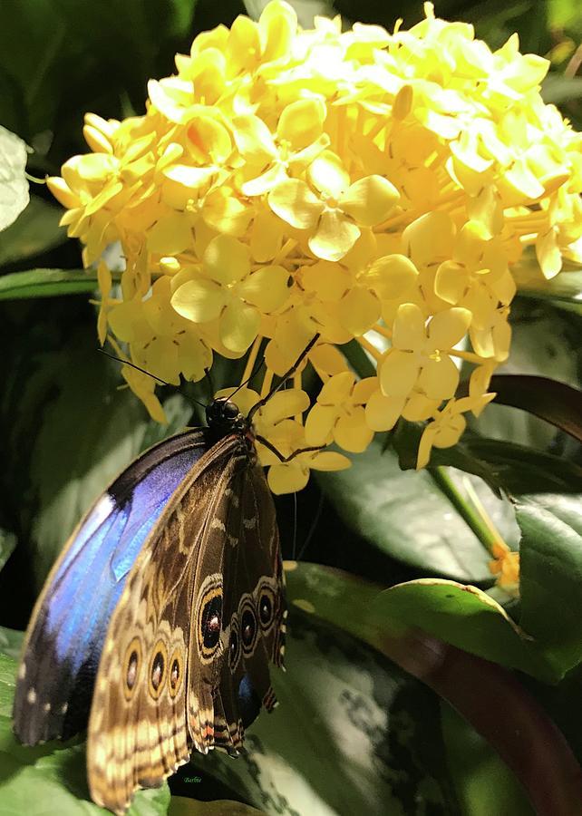 Butterfly On Buttery Flower Photograph