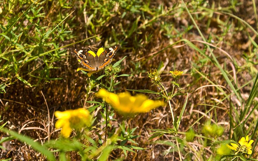 Butterfly Photograph - Butterfly On Flower by Douglas Barnett