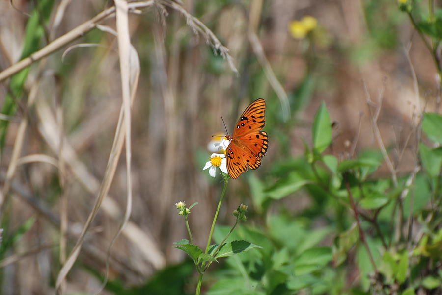 Nature Photograph - Butterfly On Flower by Rob Hans