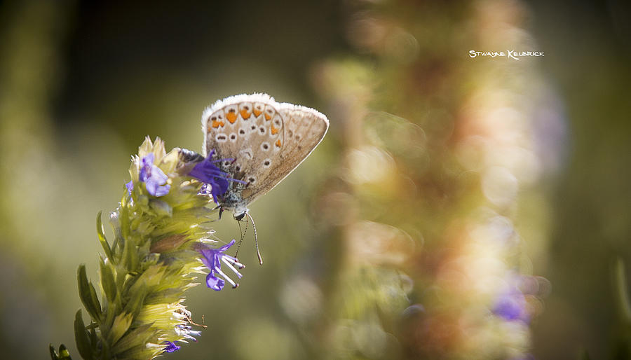 Macro Photography Photograph - Butterfly On The Spot by Stwayne Keubrick