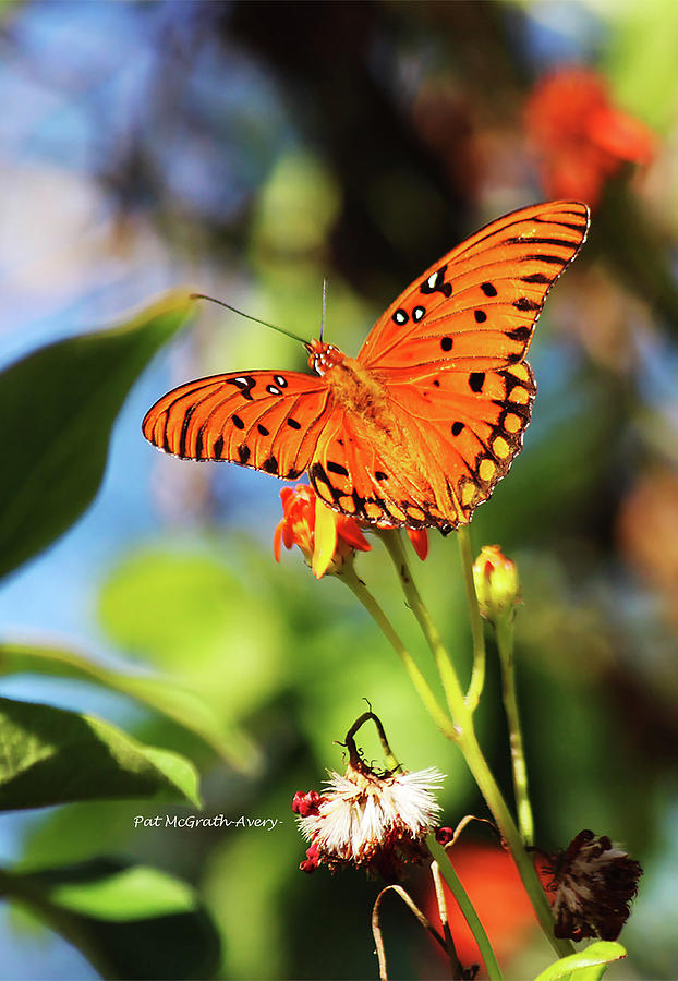 Butterfly Photograph - Butterfly by Pat McGrath Avery