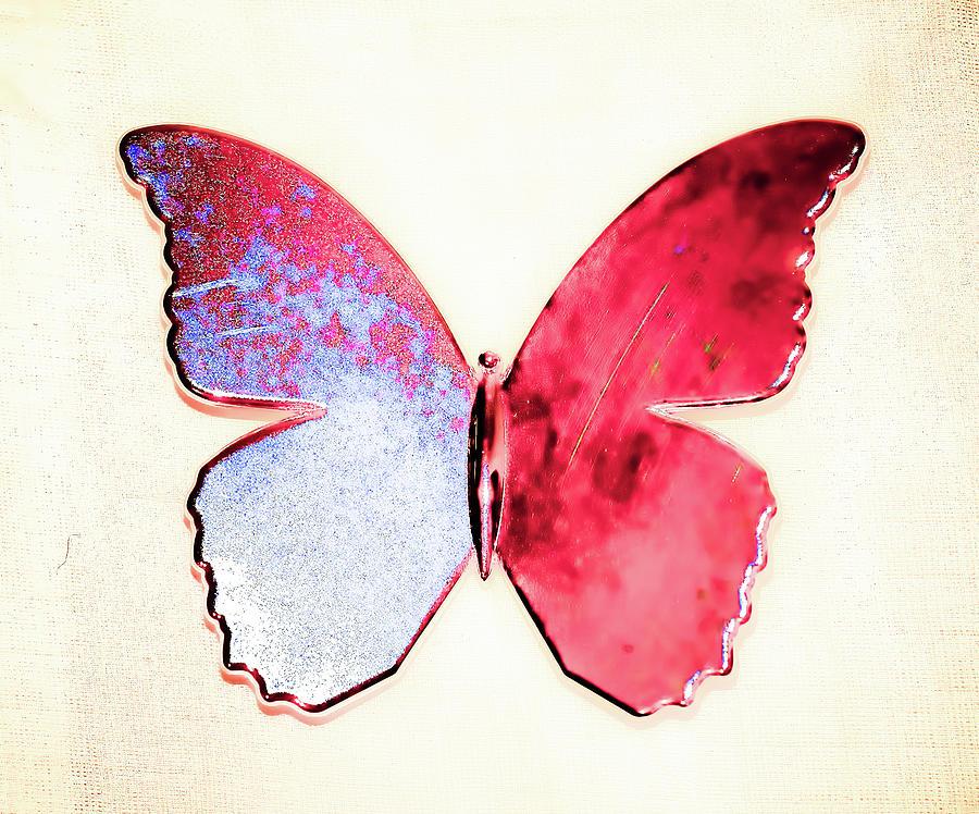 Butterfly Photograph - Butterfly by Paul Jarrett