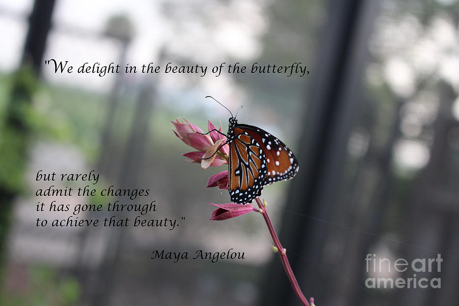 Butterfly Quote Art Print Photograph By Ella Kaye Dickey