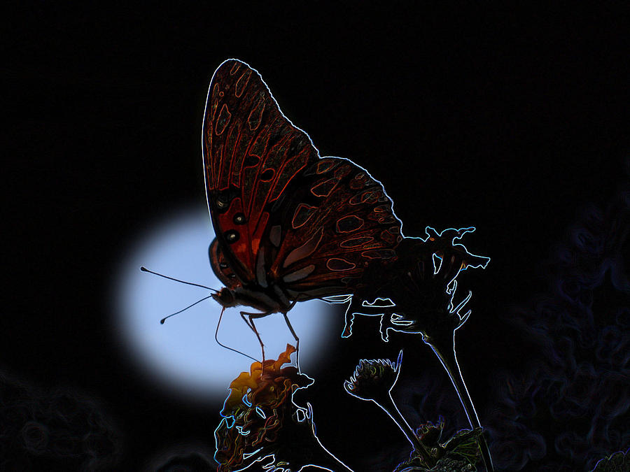 Butterfly Photograph - Butterfly by Rick McKinney