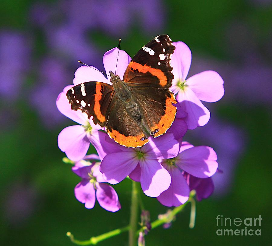 Butterfly Photograph by Robert Pearson