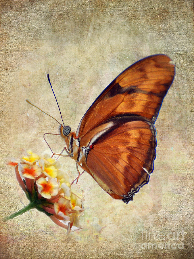 Butterfly Pyrography - Butterfly by Savannah Gibbs
