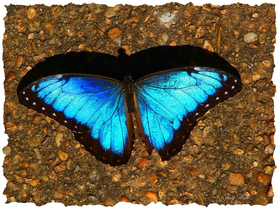 Shadow Photograph - Butterfly Shadow by Judy  Waller