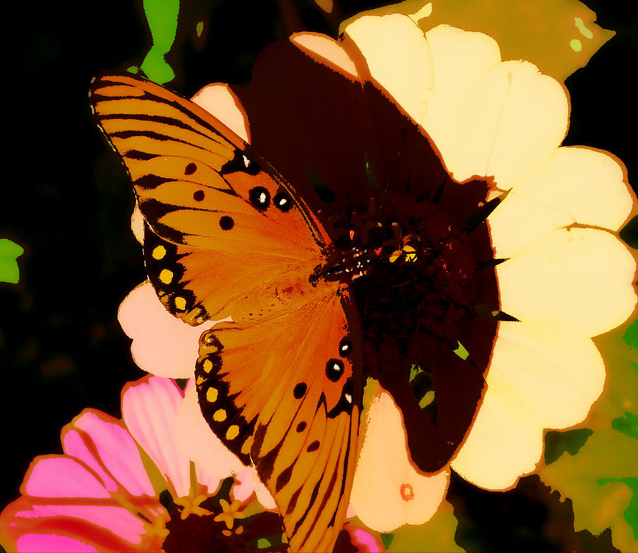 Butterfly Photograph - Butterfly Shadows by Dottie Dees
