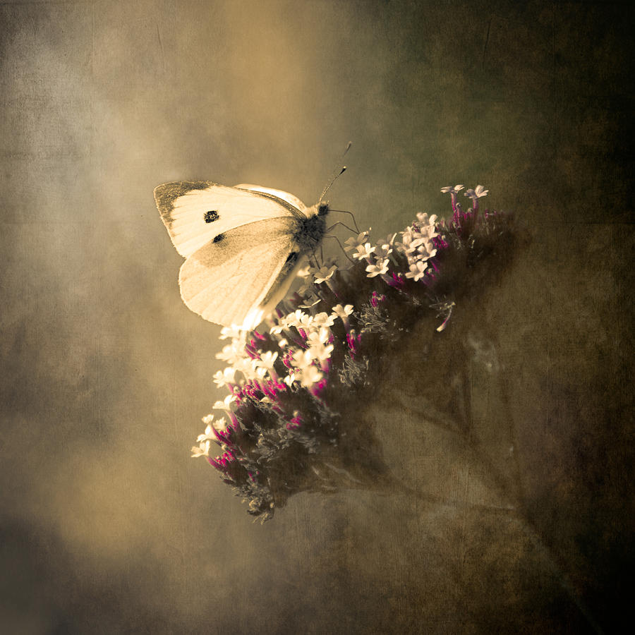 Photo Photograph - Butterfly Spirit #01 by Loriental Photography