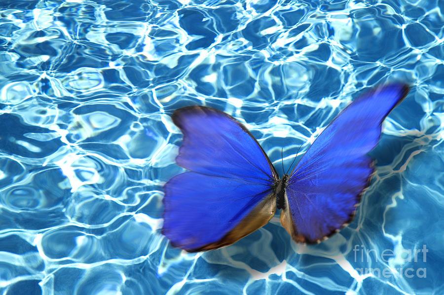 Animals Photograph - Butterfly by Tony Cordoza