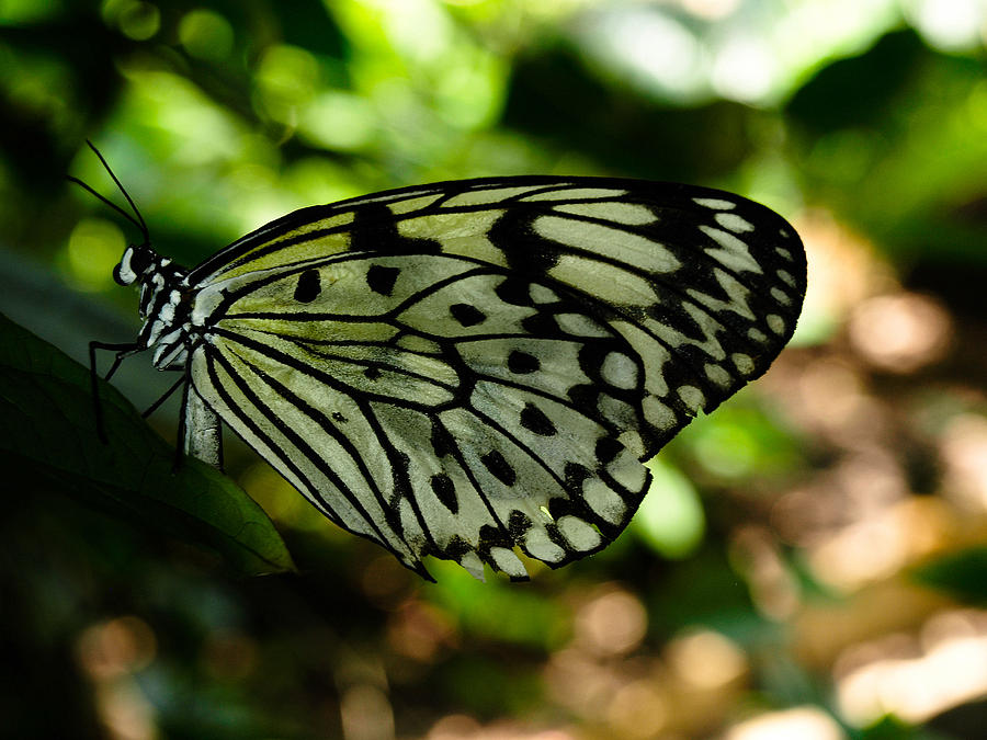 Butterfly Photograph - Butterfly by Valeria Donaldson