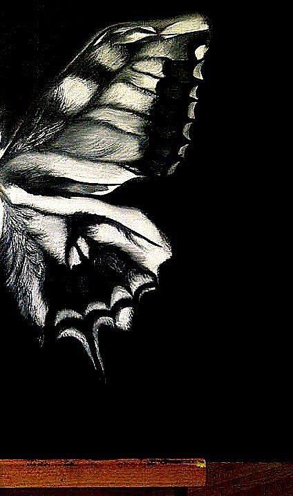 Butterfly Wing Painting by Ambreen Ali