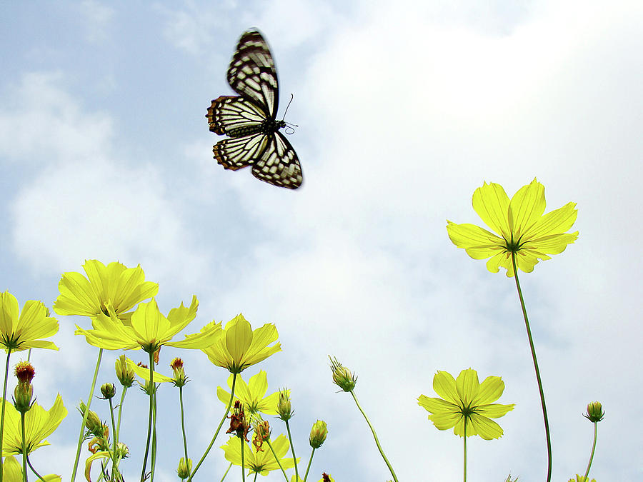 Horizontal Photograph - Butterfly With Flowers by Adegsm