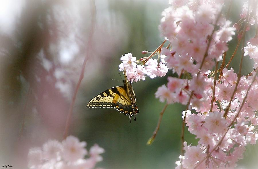 Butterfly Photograph - Butterfly With Misty Pink by Molly Dean