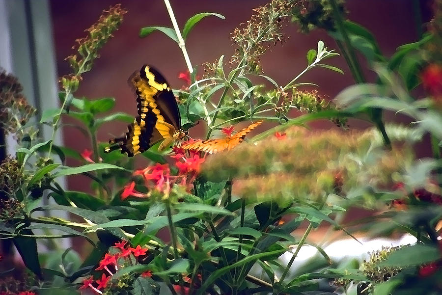 Butterfly Photograph - Butterfly World Watercolor 2 by Steve Ohlsen